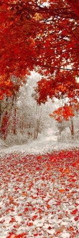 orange leaves and snowfall