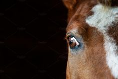 Eye of the horse close-up by konstantin.tronin on @creativemarket