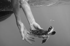 sea, baby turtle, black and white, hands