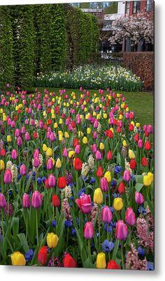 Keukenhof Motley Of Colorful Tulips and Hyacinths Metal Print by Jenny Rainbow Fine Art Prints, Framed Prints, Beautiful Flowers Garden, Any Images, Botanical Gardens, Spring Flowers, Fine Art Photography, Tulips, Netherlands