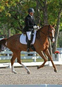 Dressage Horse For Sale: Wonderful 6 y.o. gelding — DressageStar.com