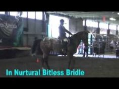 Nurtural News & Highlights Jan 09 - Please enjoy these highlights of recent bitless news and examples of how quickly and easily horses convert from bit to bitless. See wild mustangs trained bitless in only 100 days being ridden bitless & blindfolded at the Extreme Mustang Makeover. Enjoy the photos and story as Caitriona OLeary from Ireland rides a stallion bitless across India. Doesnt your horse deserve a Nurtural Bitless Bridle?