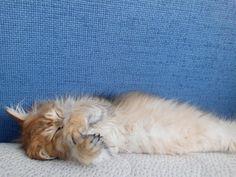 Instagram Images, Instagram Posts, Insta Saver, Cats, Animals, Gatos, Animales, Animaux, Animal