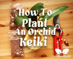 How to Plant an Orchid Keiki by Mr. Brown Thumb