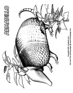 armadillo free coloring pages for kids printable colouring sheets