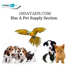 10dayads.com has a pet supply section. #FreeAdWebsites #OnlineVideoAd