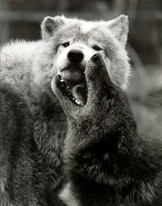 """Cherokee Native American: """"A fight is going on inside me…it is a terrible fight and it is between two wolves.  One wolf represents fear, anger, envy, sorrow, regret, greed, arrogance, self-pity, guilt, resentment, inferiority, lies, false pride, superiority, and ego. The other stands for joy, peace, love, hope, sharing, serenity, humility, kindness, benevolence, friendship, empathy, generosity, truth, compassion, and faith. Which wolf will win? The one you feed."""""""