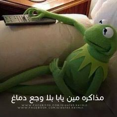 Funny Frogs, Kermit The Frog, Funny Comments, Funny Messages, Green Man, Emoji, Dinosaur Stuffed Animal, Comedy, Jokes