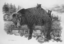 Naptime Yet?  one of many of my Black Bears and Grizzly Bear wildlife drawings by Virgil C. Stephens at www.pencildrawing.net