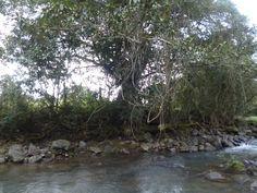 En un camino de Veracruz