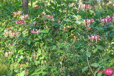 19 roślin, które będą rosły w zacienionych miejscach! - Twoje DIY Clematis, Bonsai, Diy And Crafts, Pergola, Plants, Gardening, Outdoor Pergola, Lawn And Garden, Plant