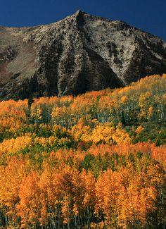 Autumn in the Rockies , Kebler Pass, Colorado - Jason Branz