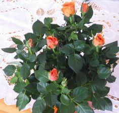 Special Flowers, Beautiful Roses, Indoor Plants, Garden, Presents, Paper, Inside Plants, Gifts, Garten