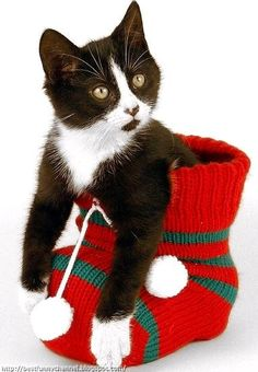 """* * """" Yoo be dumber den me thoughts. Yoo can'ts see dis sock be 50 times too big fer me?"""""""