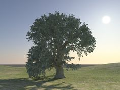 tree and ground textured 3d model free