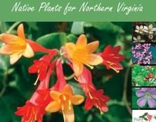 native plants of northern virginia for part shade for sun for wet and dry conditions take this guide with you to the garden center