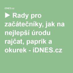 ▶ Rady pro začátečníky, jak na nejlepší úrodu rajčat, paprik a okurek - iDNES.cz