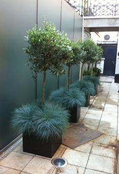 Tree and grass planter