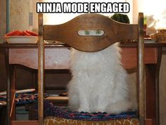 Funny pictures about Ninja mode engaged. Oh, and cool pics about Ninja mode engaged. Also, Ninja mode engaged. I Love Cats, Crazy Cats, Cute Cats, Funny Animal Pictures, Funny Animals, Cute Animals, Humorous Pictures, Animals Images, Animal Pics