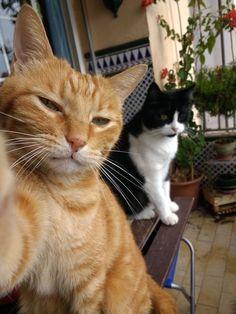 Cute Baby Cats, Cute Funny Animals, Cute Baby Animals, Funny Cats, I Love Cats, Crazy Cats, Cool Cats, Cat Selfie, Selfies
