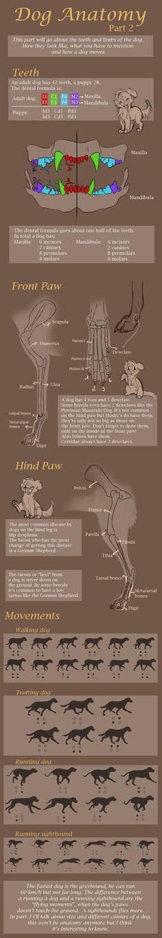 So here's part 2 c: _________________________ Part 1: miosita.deviantart.com/art/Dog… Size and colors: miosita.deviantart.com/art/Dog…