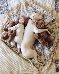 Adorable -- Nora the rescue puppy loves napping with her baby brother