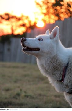 Simply Amazing! #dog #aww