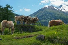 We are the bosses here by Filipe Coelho on Be The Boss, Horses, In This Moment, Mountains, Random, Nature, Pictures, Photography, Travel
