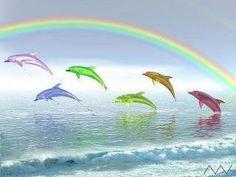 rainbow dolphins in the rainbow! ♥