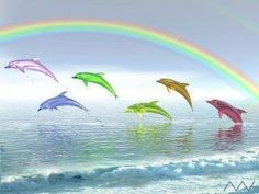 rainbow dolphins in the rainbow! ♥