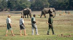 Zambia safaris are home to breathtaking wilderness & diverse wildlife. A country of great integrity, it holds on to the true values of safari travel. Walking Holiday, African Safari, Africa Travel, Cool Places To Visit, Wilderness, South Africa, Tours, Vacation, Special Interest