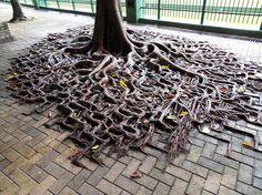 Bomen veroveren hun plek terug tussen de stenen