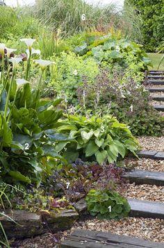Een kant-en-klaar beplantingsplan voor 2 m² voor de natte grond! Planten die ook in schaduw kunnen?