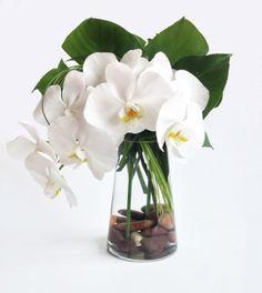 Orchid Simplicity - Floral Art