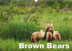 Grizzly bears in their natural environment. Stunning photos taken of this specie in the Alaskan wilderness.