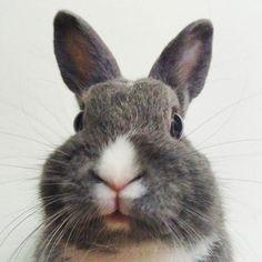 What's up? 🐇 MBR  #rabbit #bunnies #webstapets #rabbitgram #cuteanimals  #dwarfrabbit  #animalgram #netherlanddwarf #rabbitofinstagram #rabbitoftheday #misterbluerabbit #mbr #cuteanimals #photoofday #instarabbit #pet #petworld #animalphotography #petstagram #babyanimals #cutepetclub #bunnystagram  #kawaii  #instapet #fabbunnies #rabbitworldwide #rabbitstagram @babyanimalshq @babyanmlpage @cutestthingsthereis #babyanimalpets  #animaladdicts #my_perfect_pet
