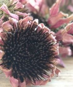 Greek Gods, Ancient Greek, Herbs, Flowers, Plants, Herb, Plant, Royal Icing Flowers, Flower