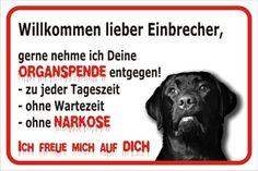 Schild Vorsicht Labrador - Willkommen lieber Einbrecher (20x30cm)