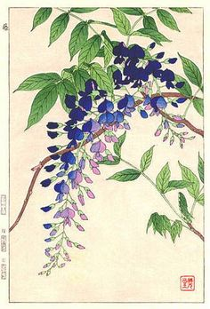 Wisteria, Blue, by Kawarazaki Shodo (published by Unsodo):: Botanical Drawings, Botanical Illustration, Botanical Prints, Illustration Art, Illustrations, Watercolor Flowers, Watercolor Paintings, 1 Tattoo, Japanese Painting