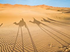 What to Do in Morocco: Morocco's most popular tours dazzle the senses. Stay in a riad, spend the night in the Sahara Dunes, ride the Wind in Essaouira and so much more.