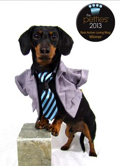 I just won 'Best Active Living Blog' at the Petties! http://celebritydachshund.com