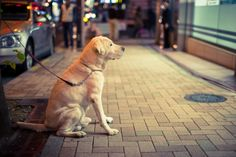 Why You Shouldn't Leave Your Dog Tied Up Outside a Store