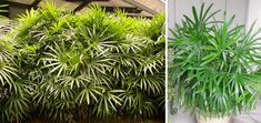 Herbs, Plants, Planters, Herb, Plant, Spice