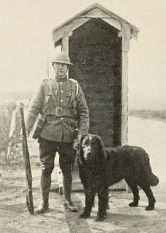 A British sentry dog
