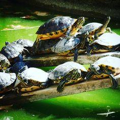 Wird #turtlecontent der neue Trend