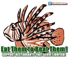 Support the restaura