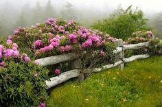 rhododendron in the garden/rustic fence Gorgeous! Garden Inspiration, Outdoor, Plants, Beautiful Gardens, Garden Bridge, Rustic Fence, Outdoor Gardens, Cottage Garden, Garden