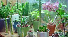 Luwasa Hydroculture Soil Free Planters