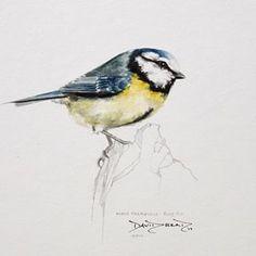 Blue Tit#watercolour #britishbirds #illustration #painting #original