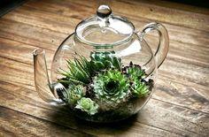 Tiny teapot terrarium, unique terrarium